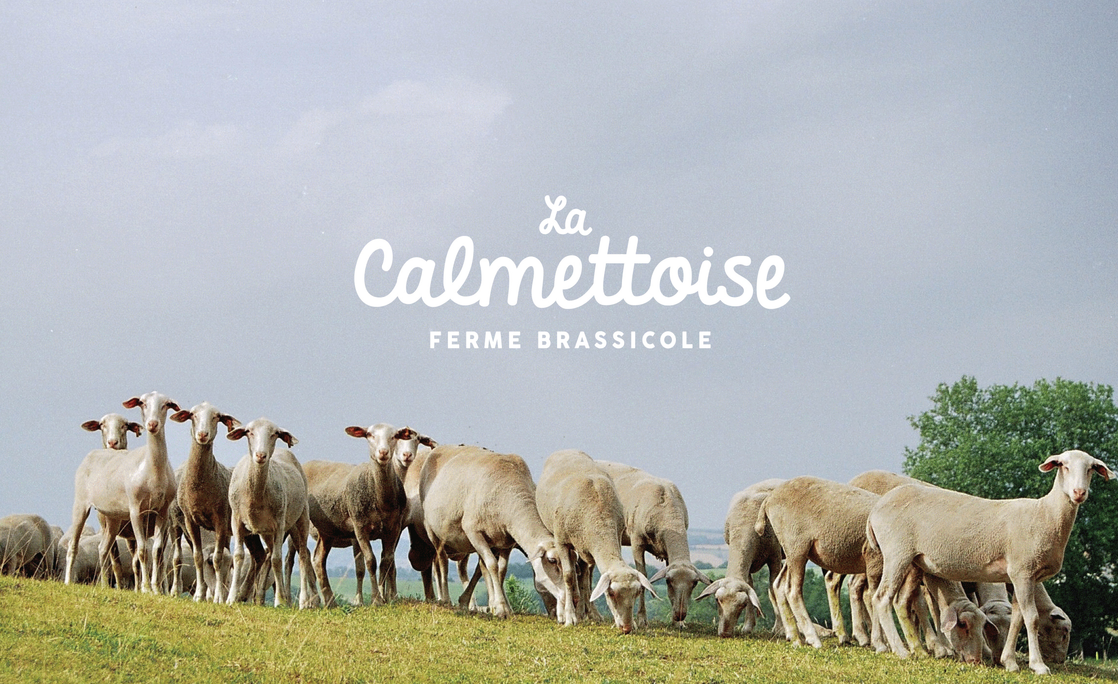 Calmettoise Logo